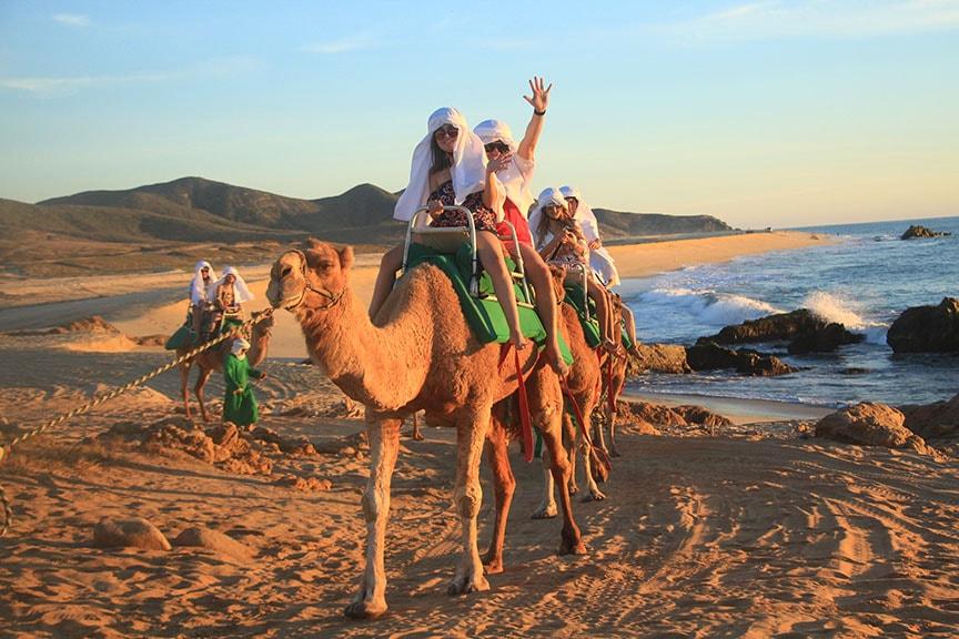 Camellos en Los Cabos