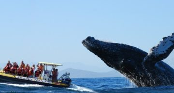 For whale-watching: Cabo is the place!