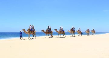 Riding camels between the desert and the sea in Cabo: a movie-like experience.